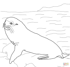 Great Seal Coloring Pages Seal Coloring Pages Seal Coloring Pages