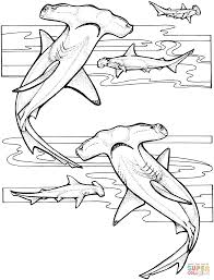 Small Picture Hammerhead Sharks coloring page Free Printable Coloring Pages