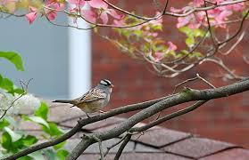 Bird Watching Tips Itu0027s Summer Where Did The Birds Go  All Backyard Bird Watch
