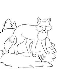 Small Picture Polar Bear Coloring Page Artic Animals Pinterest Coloring