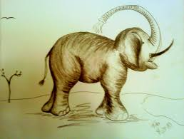 Baby Elephant Drawings Sabrinas Baby Elephant Drawing By Tobi Cooper