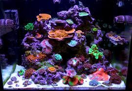 Saltwater Aquarium Lighting Guide Reef Tank Lighting Schedule What Is The Ideal Spectrum