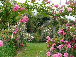 Rose Garden Desktop Wallpapers - Top ...