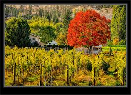 Image result for Images of fall in Summerland, BC