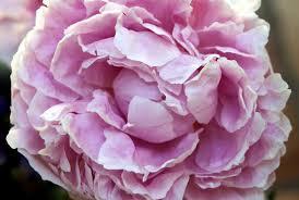 Photo-Gallery-Flowers