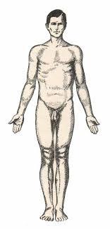 Kết quả hình ảnh cho mặt phẳng giải phẫu
