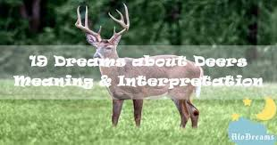 19 dreams about deers meaning