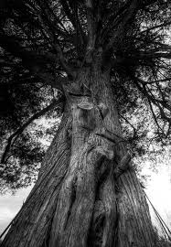 Severed | Walter Arnold | Flickr