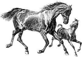 Paardenstal Kleurplaat Kleurplaat Stal Afb 9894 Kleurplatenlcom