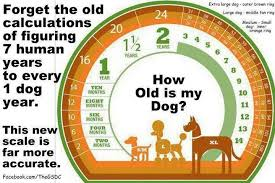 Dog To Human Years Chart How Old Is Your Pet In Human Years New Info Podcast