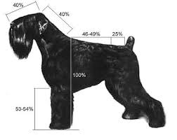 Giant Schnauzer Size Chart Growth Chart Black Russian Terrier Google Suche Black