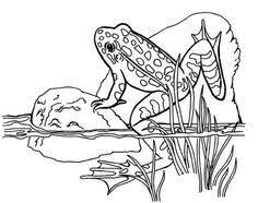 Small Picture tree frog coloring 231x300 Frog Coloring Pages sketches and