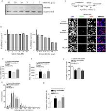 melk t a small molecule inhibitor of protein kinase melk   figure