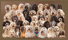 lots of dogs together. Delighful Lots The Gallery For U003e Lots Of Dogs Together On E