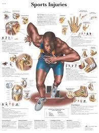 Pinterest Medical 24 Best PT Sports Medicine Images On Pinterest Anatomy Physical 19