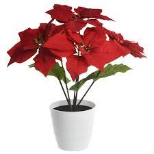 Led Tischleuchte Weihnachtsstern Rot Im Blumentopf Orphelia