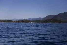 Barkley Sound Ucluelet Info Com The Ultimate Guide To The