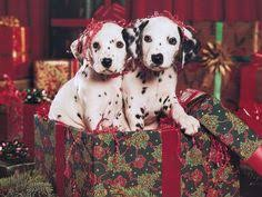 christmas puppies wallpaper. Plain Puppies Great Desktop Wallpaper Free Christmas Puppy Wallpaper Pixel Super Cool Hd  For Desktop Trully Awesome For Puppies P