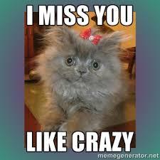 I MISS YOU LIKE CRAZY - cute cat | Meme Generator via Relatably.com