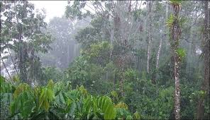 tropical rainforest raining. Fine Tropical 20120601800pxRain_in_Tenajpg Throughout Tropical Rainforest Raining P