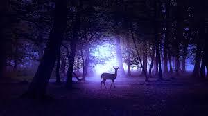 Deer in Night 4K Wallpapers