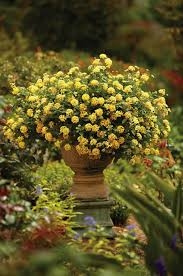 Small Picture Container Garden Design Color Proven Winners