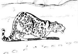 Baby Leopard Coloring Page Coloring Pages