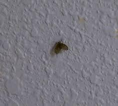 Small Gnats In Kitchen Drain Flies Stoppests Ipm In Multifamily Housing Blog