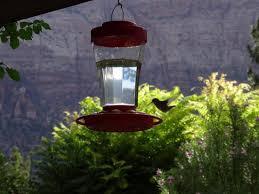cliffrose lodge gardens. Cliffrose Lodge \u0026 Gardens: Vor Den Zimmern Kolibritränke Mit Kolibri Gardens A