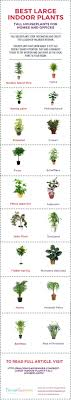 best low light office plants. Indoor Office Plants No Light Melbourne Best 25 Ideas On Pinterest Inside And Low L