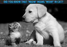 cute kittens and puppies quotes. Contemporary Kittens Cute Puppy Kitten Dogs Cats Quote To Cute Kittens And Puppies Quotes Pinterest