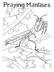 41a9ecd8ce49b6006f72cf492fca8696 school worksheets praying mantis hysterical hyperboles ������� ������� on watsons go to birmingham worksheets