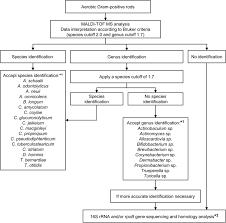 Gram Positive Bacilli Evaluation Of The Bruker Maldi Biotyper For Identification Of Gram