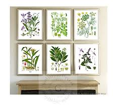 botanical herb prints wall art set of 6