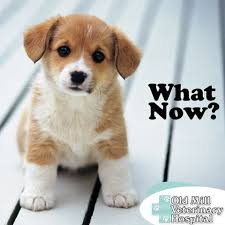 what you should know when you getting a puppy best top care with dogs