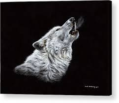 black and white wolf howling photography. Exellent Howling Wolf Acrylic Print Featuring The Drawing White Howling By Sarah  Stribbling Throughout Black And Photography B