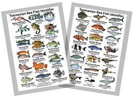 Australian Reef Fish Species Chart Fishes Of Australia