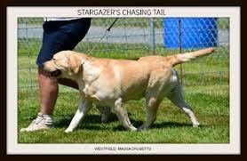 STARGAZER'S CHASING TAIL
