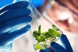Biotechnology Student Internship