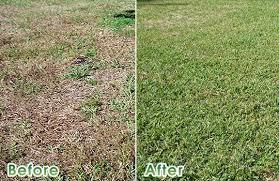 When Do You Fertilize Lawns Mycoffeepot Org