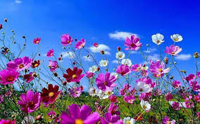 Une nouvelle fleur en plein questionnement - Page 4 Images?q=tbn:ANd9GcTSoUUxvO8SJmsu0Se7ltXNpDPfynfeuiEk7-bajExUfBhlKQzo