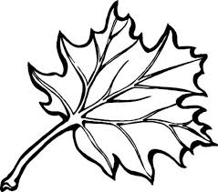 Eastern Black Oak Leaf Coloring Page