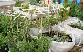 bag gardening. super idea garden in a bag the vegetable telegraph gardening