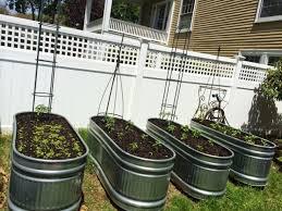 galvanized stock tanks for gardening cheery and cheer our 2016 veggie garden