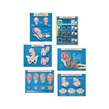 Amazon Com Six Essential Labor And Birth Charts 6
