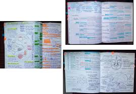 10 Examples Of Student Notes Provided By Student 2 A Third Year