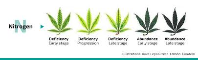 Cannabis Problem Chart Nutrient Deficiencies And Excesses In Cannabis Growing