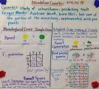 Big Ideas In Biology Chart Answers Big Ideas In Biology Chart Answers Free Energy And