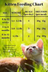 Cat Feeding Chart By Age Feeding Your Kitten Feeding Kittens Cat Ages Kitten Food