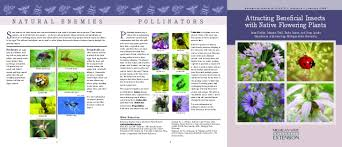 Beneficial Insects Chart Attracting Beneficial Insects With Native Flowering Plants